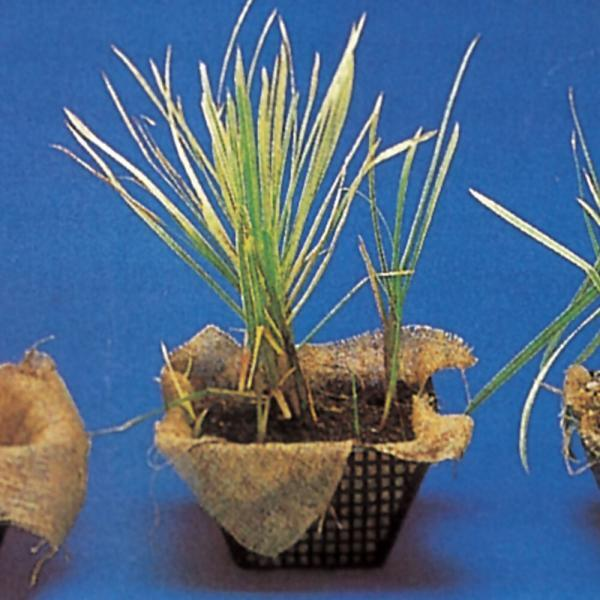 Cestelli per piante 19 x 19 x 9 cm   Giardinidacqua.it